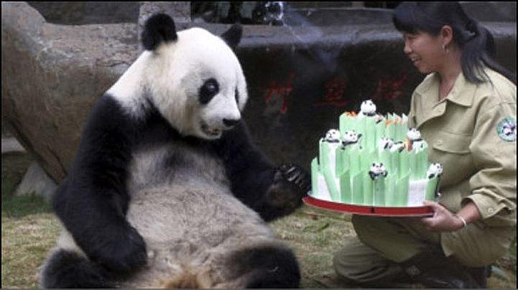 Зоологи помогают пандам