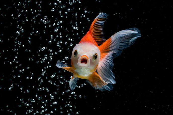 Почему рыбы не моргают?