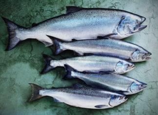 Почему рыба пахнет?
