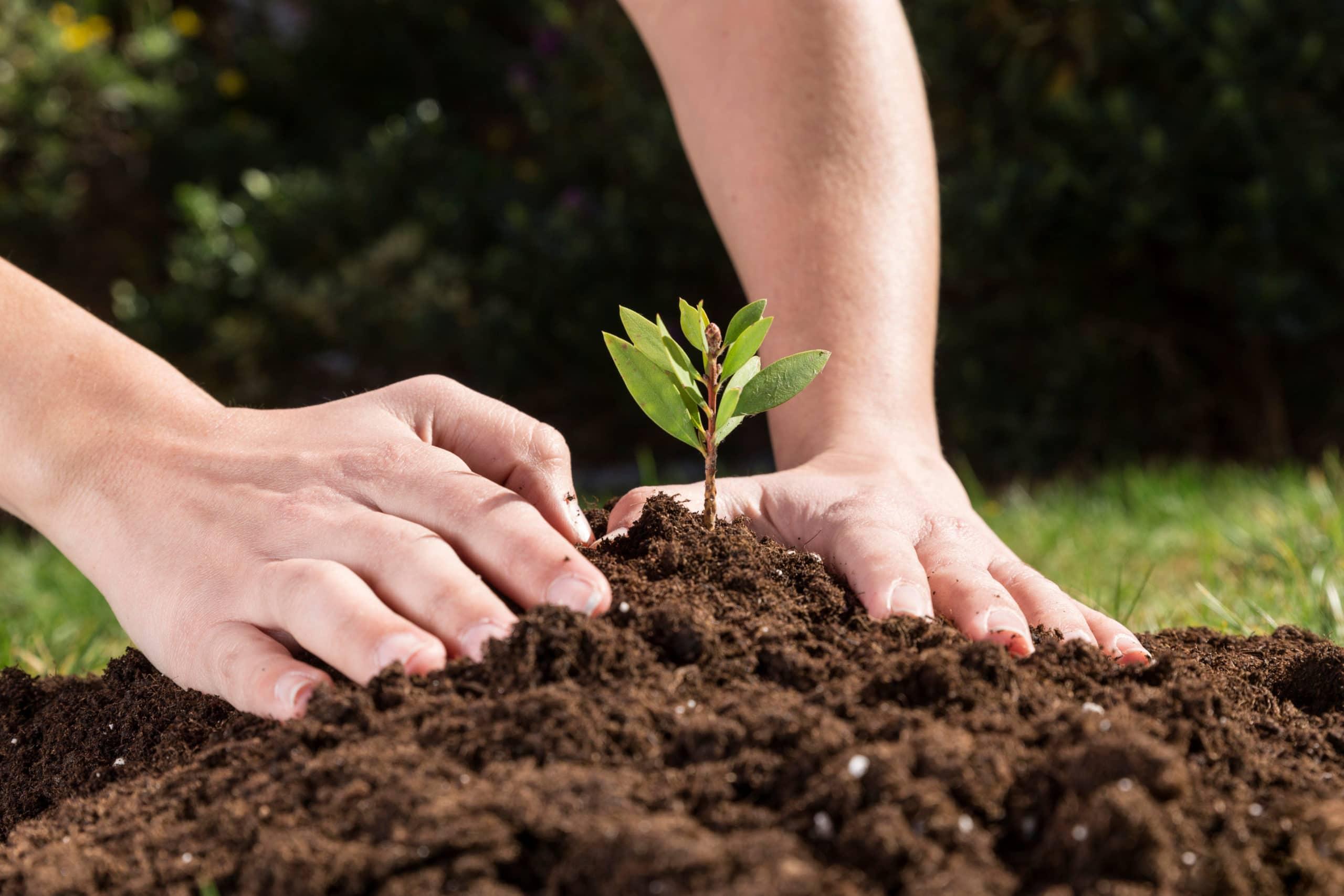 Почему растения сажают весной?