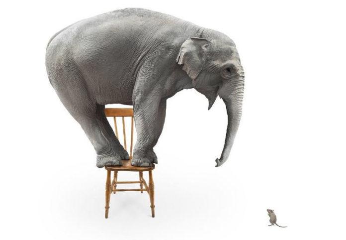 Почему слоны боятся мышей?