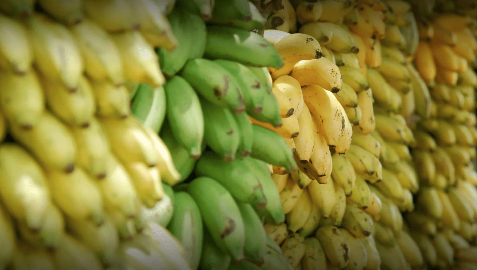 Почему сорванный неспелый фрукт дозревает?