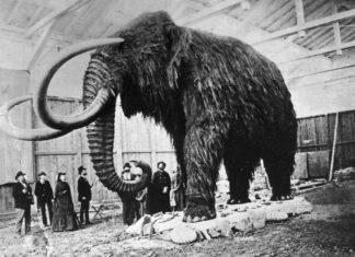 Когда появились млекопитающие?