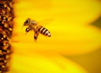 Ученые выявили негативное влияние Wi-Fi на пчел