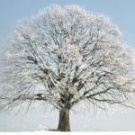 Как и почему деревья зимой выживают?