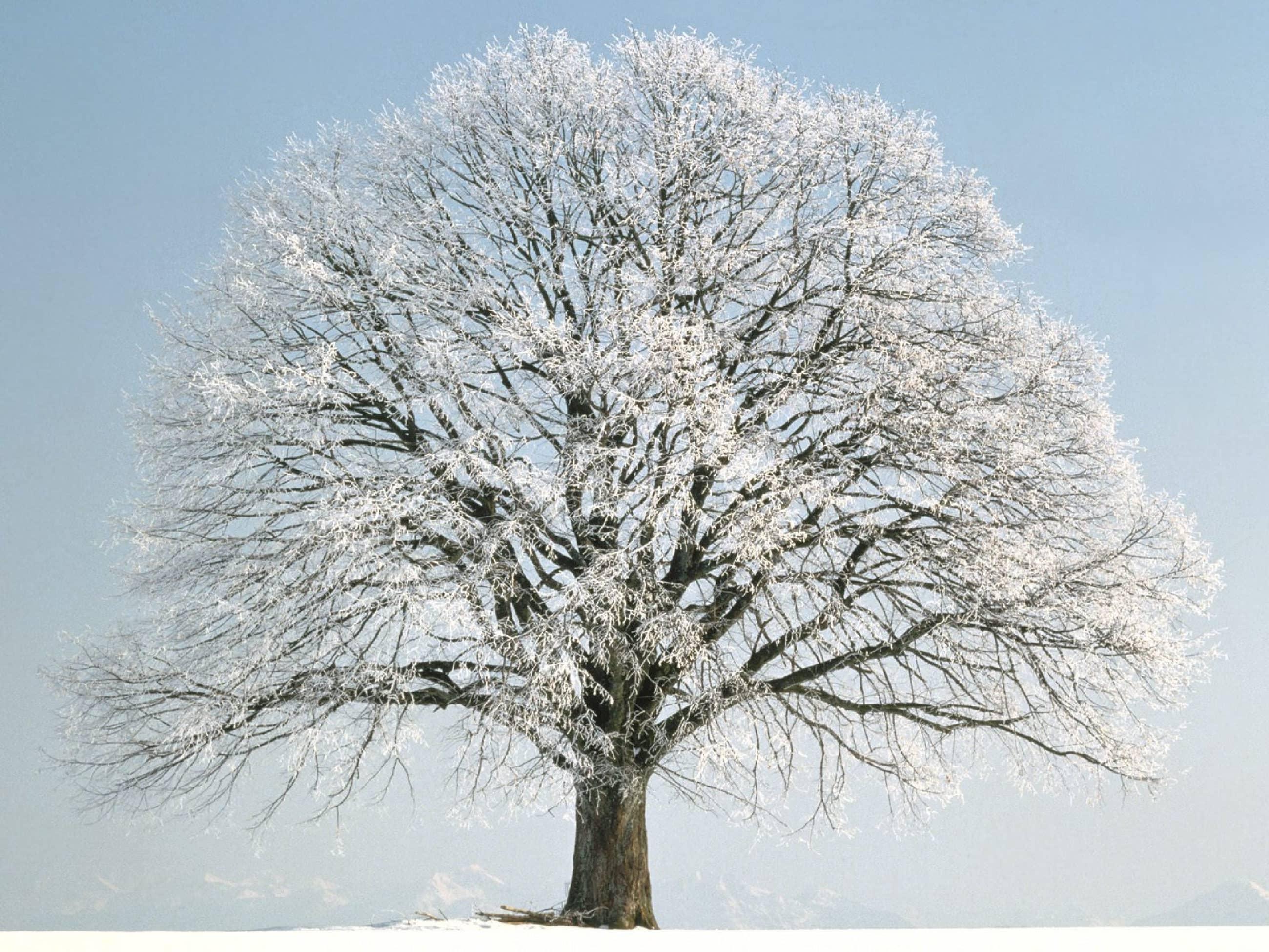 Почему деревья зимой выживают?