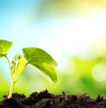 Фотосинтез – что это, определение, как происходит, фазы, значение, фото и видео