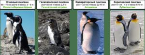 Сравнение пингвинов