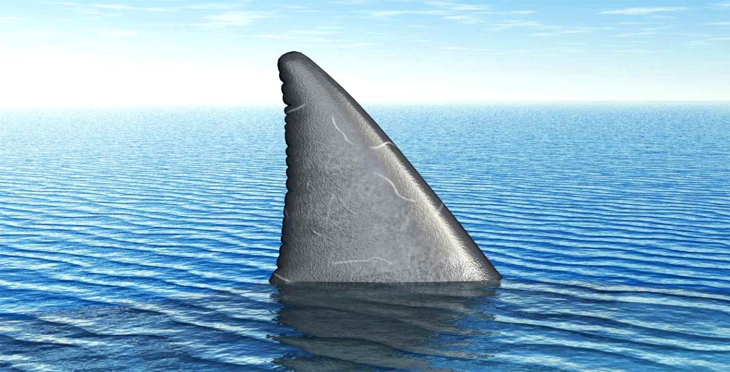 Спинной плавник акулы