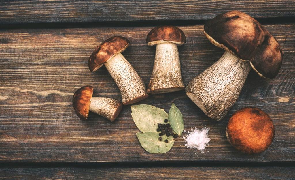 Подосиновик - универсальный гриб в плане заготовки и приготовления