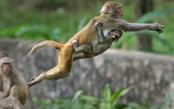 Прыжок обезьяны
