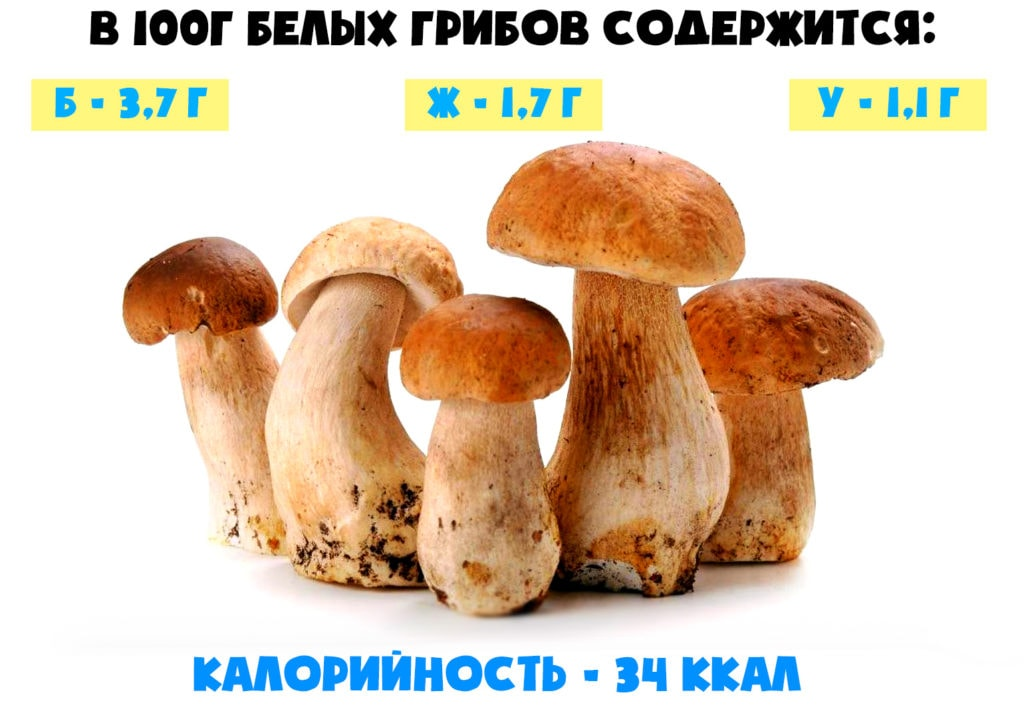 Пищевая ценность белого гриба