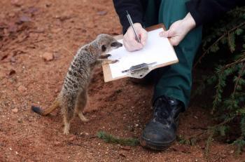 Подсчет животных