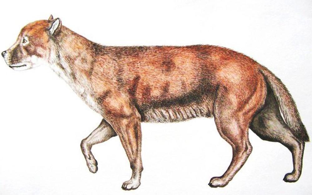 Предполагаемый предок волка