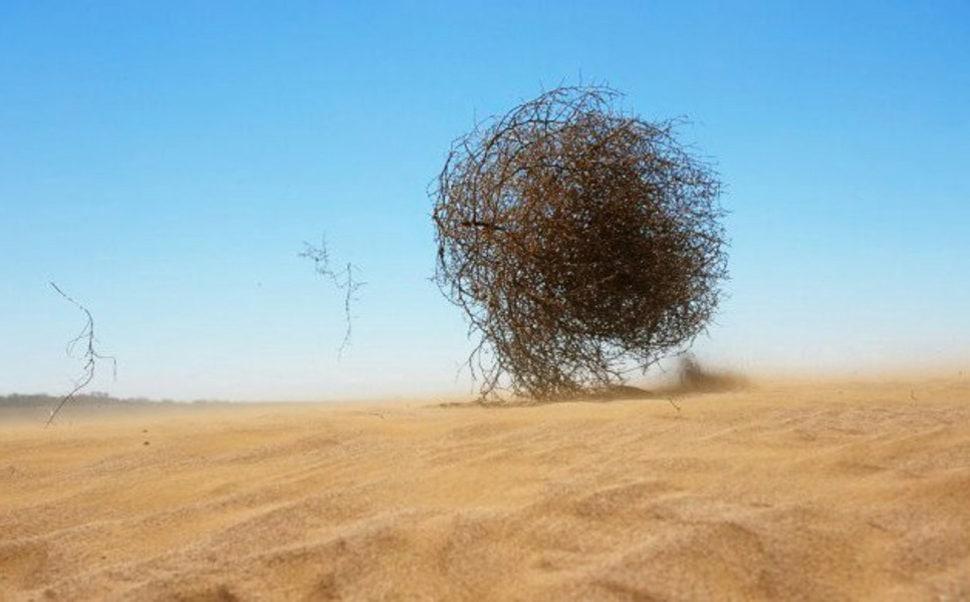 Что такое перекати-поле?