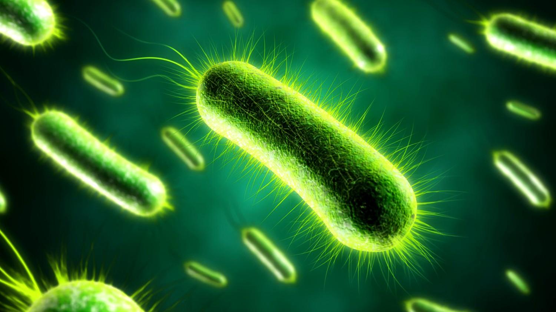 Чем питались первые живые организмы на Земле?