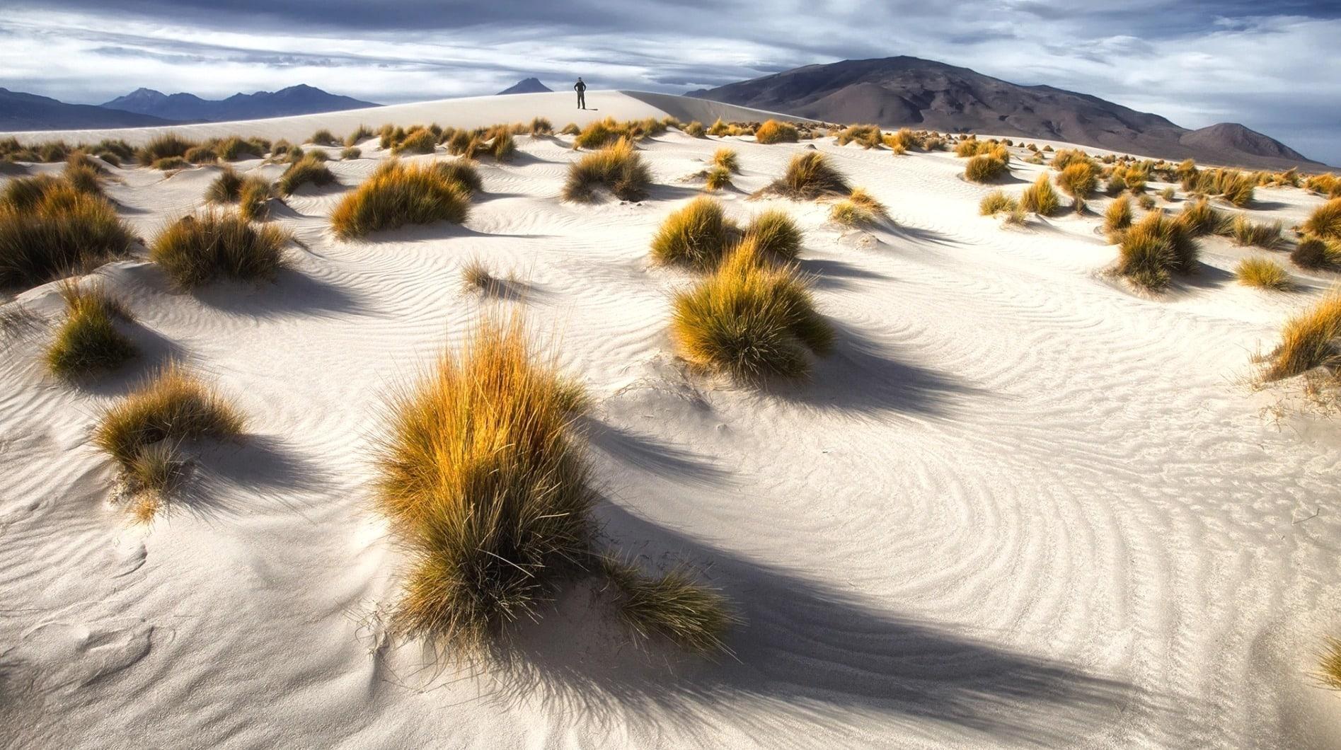 Увядающая трава - будущее перекати-поле