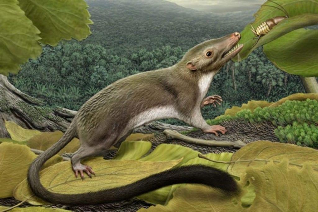 Первые млекопитающие