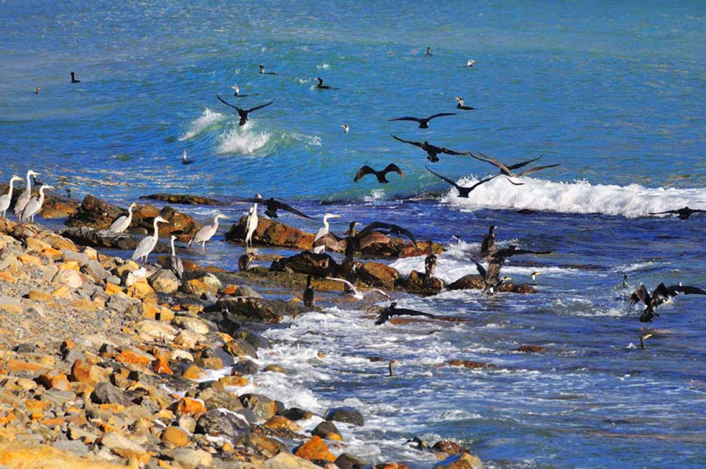 Птичий базар, Охотское море