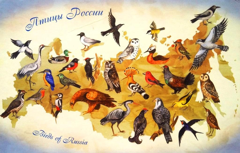 Птицы России, иллюстрация