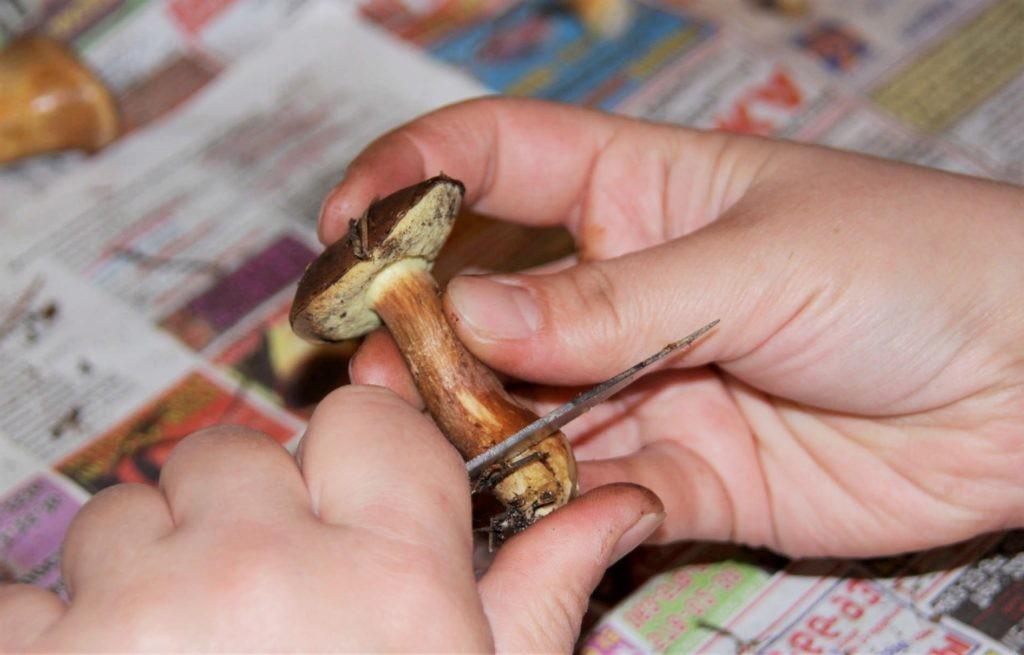 Потемнения на пальцах появляются уже после очистки первых грибов