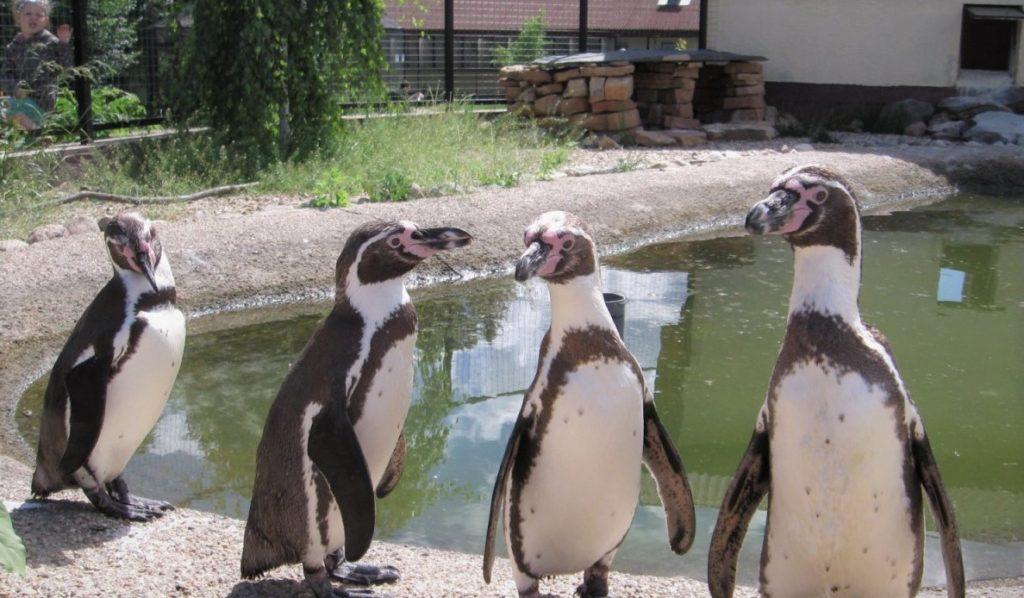 Фото из птичьего парка, где занимаются сохранением редких видов
