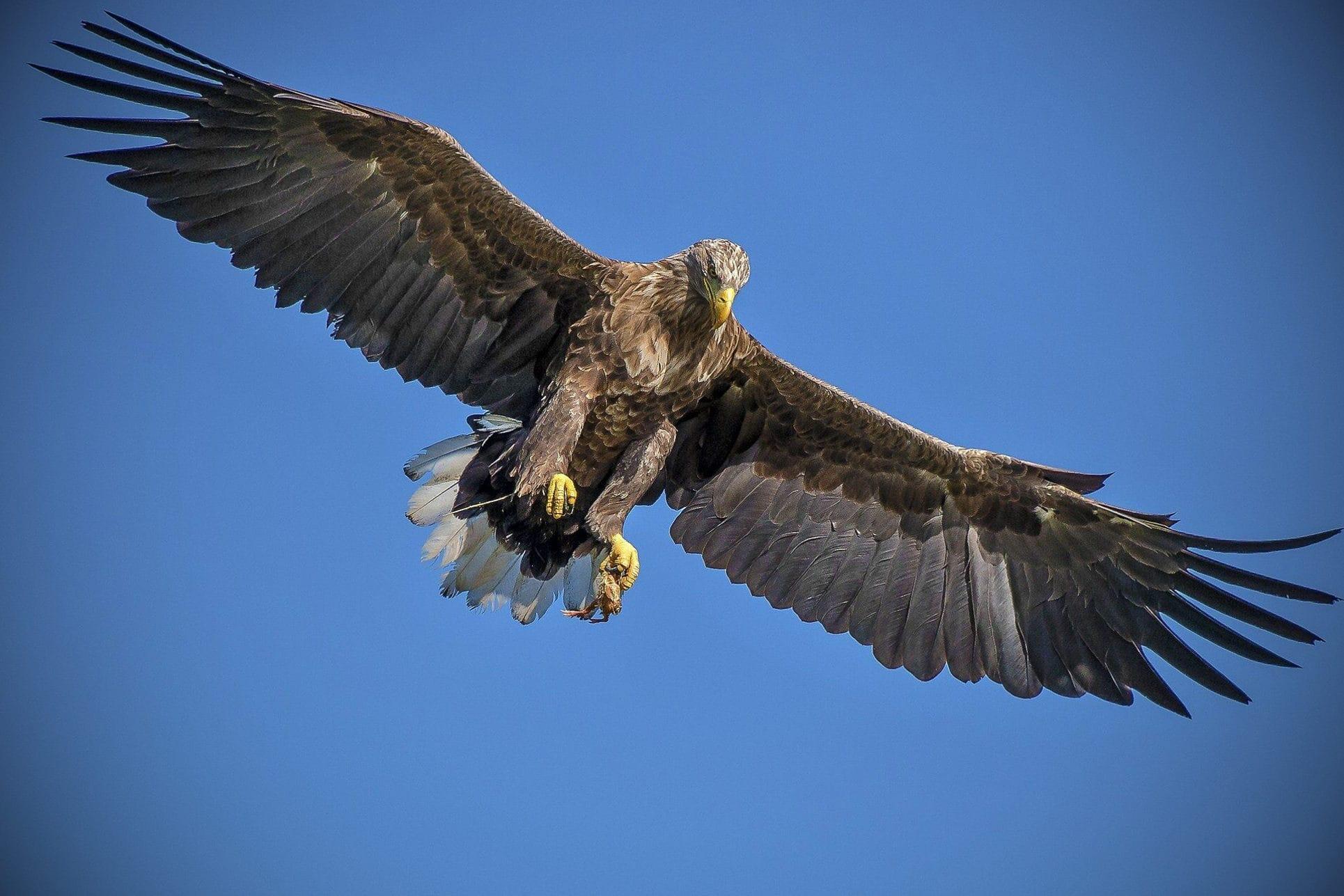 Птицы с перьями темного цвета движутся в полете более эффективно