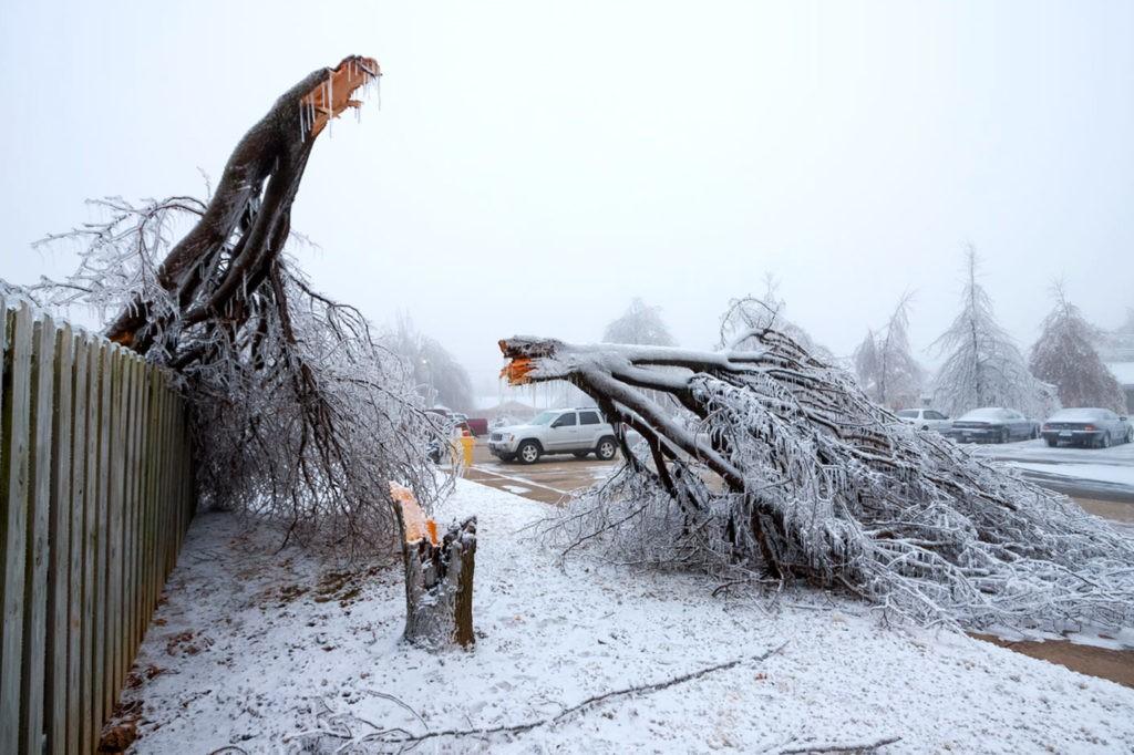 Под тяжестью льда ломаются даже толстые стволы деревьев