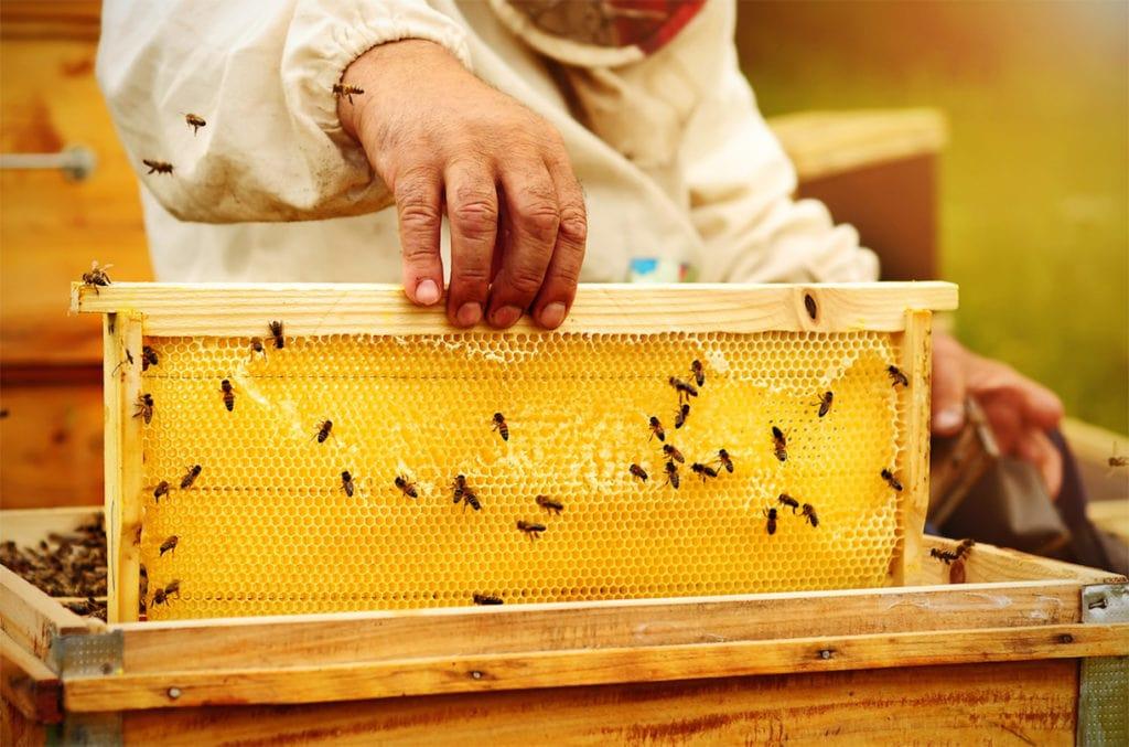 Рамки, на которых пчелы строят соты