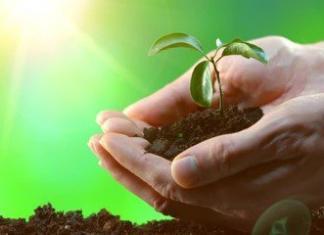 Почему растения высаживают весной?
