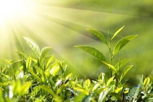 Зелёные растения