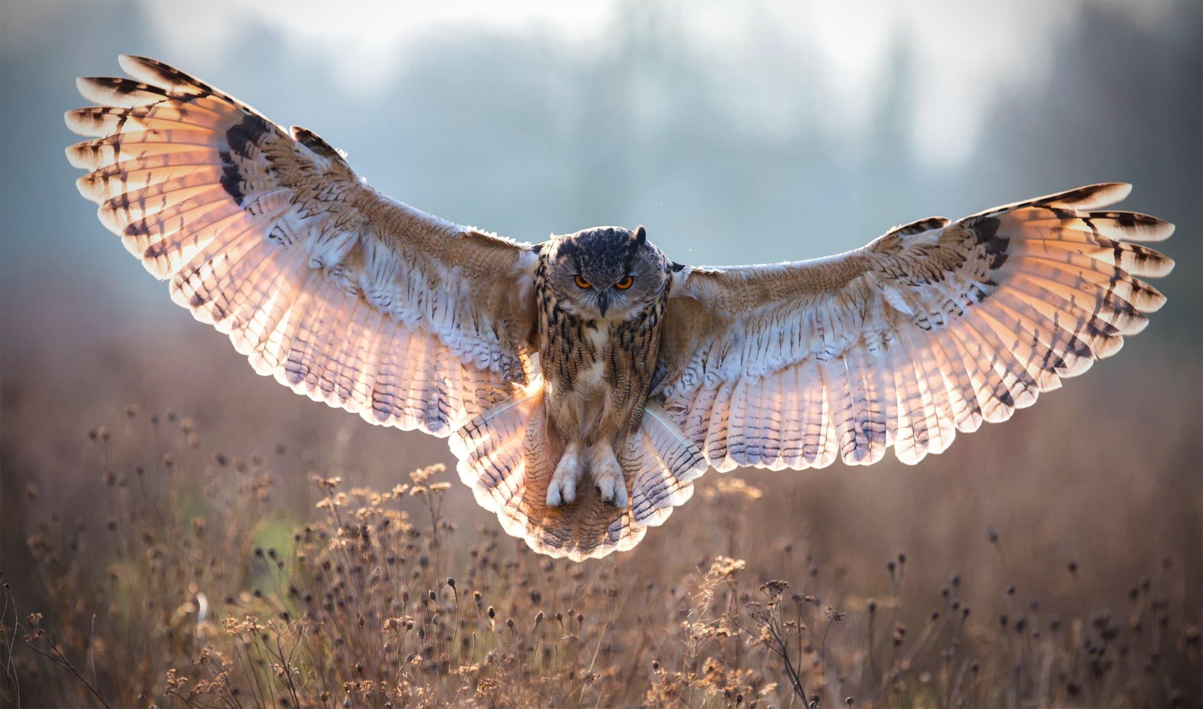 Что позволяет сове быть абсолютно бесшумной?