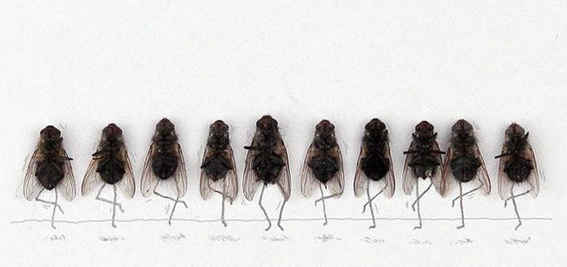 Разные мухи