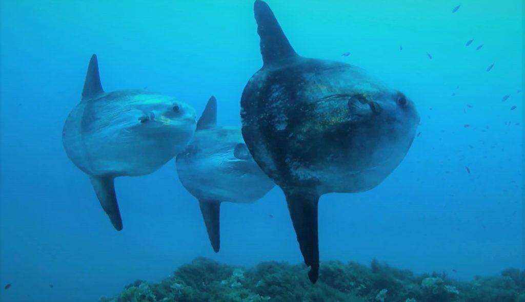 Рыбы в редких случаях сбиваются в группы