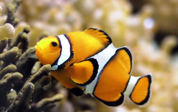 Все ли рыбы немы?