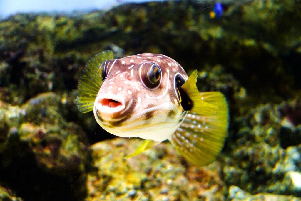 Для рыб характерна ложная зевота