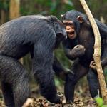 Почему животные не говорят?