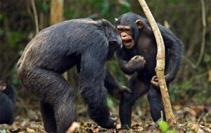 """Отличие речи человека от """"речи"""" животных"""