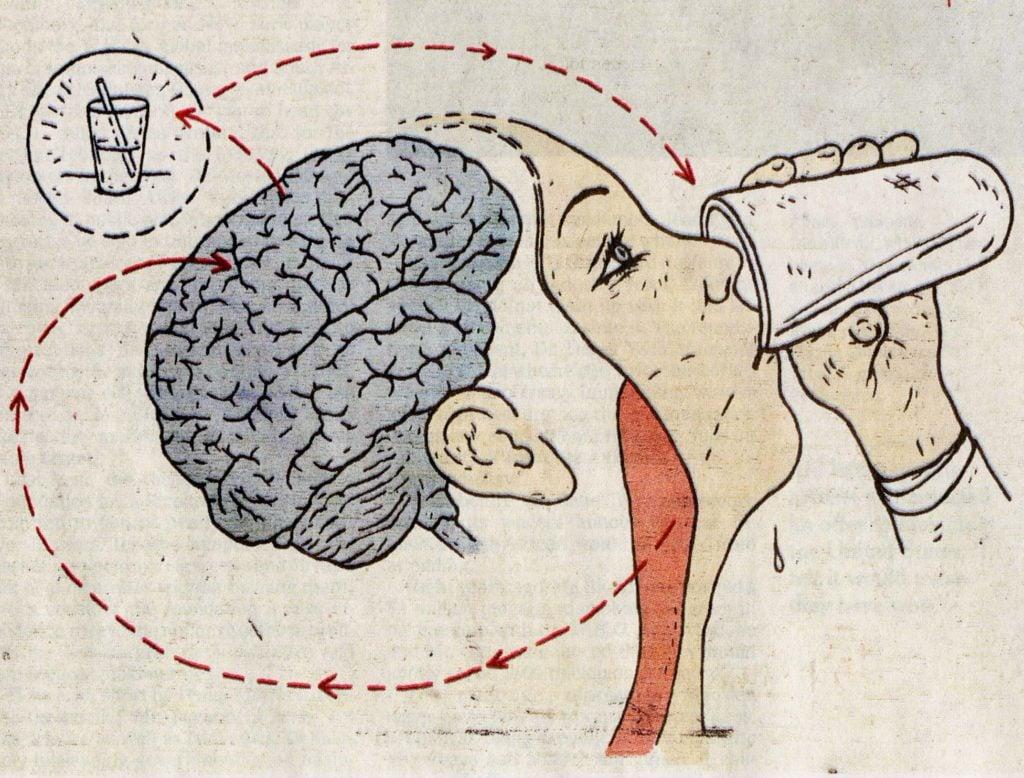 Когда человек пьет или ест, мозг заставляет надгортанный хрящ опуститься