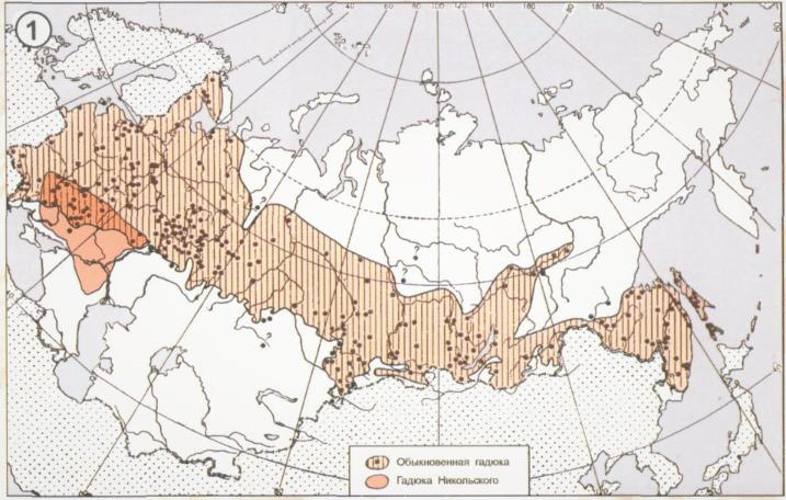 Ареал обитания гадюки обыкновенной на территории России