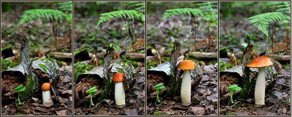 Рост гриба за 4 дня