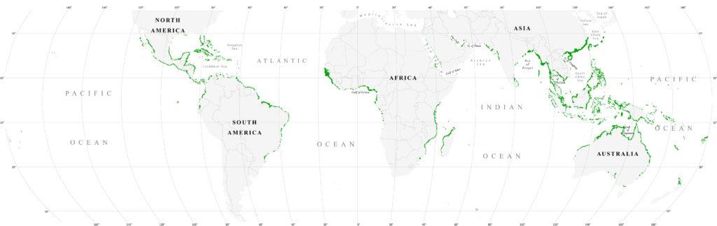 Распространение мангров