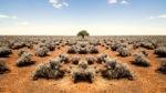 Как растения справляются с засухой в пустыне?