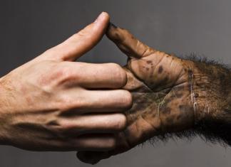 Почему пальцы на руке противопоставлены?