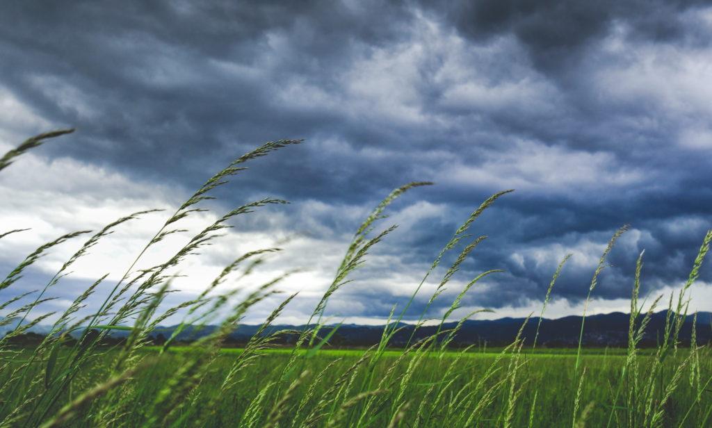На полях и равнинах из-за особенностей климата наиболее сильные ветра