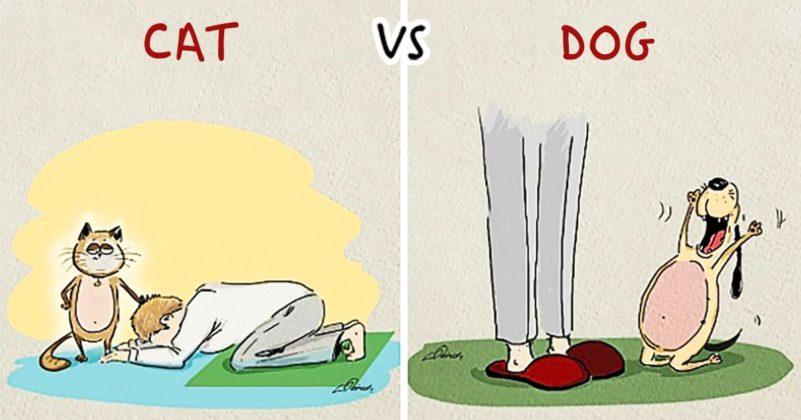 Разница в поведении между кошкой и собакой
