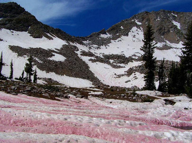 Розовый или арбузный снег