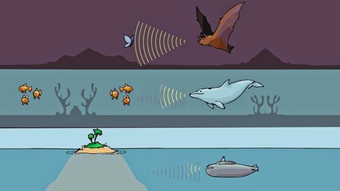 Сравнение эхолокации летучей мыши, дельфина и подводной лодки