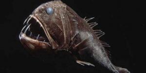Саблезубая рыба