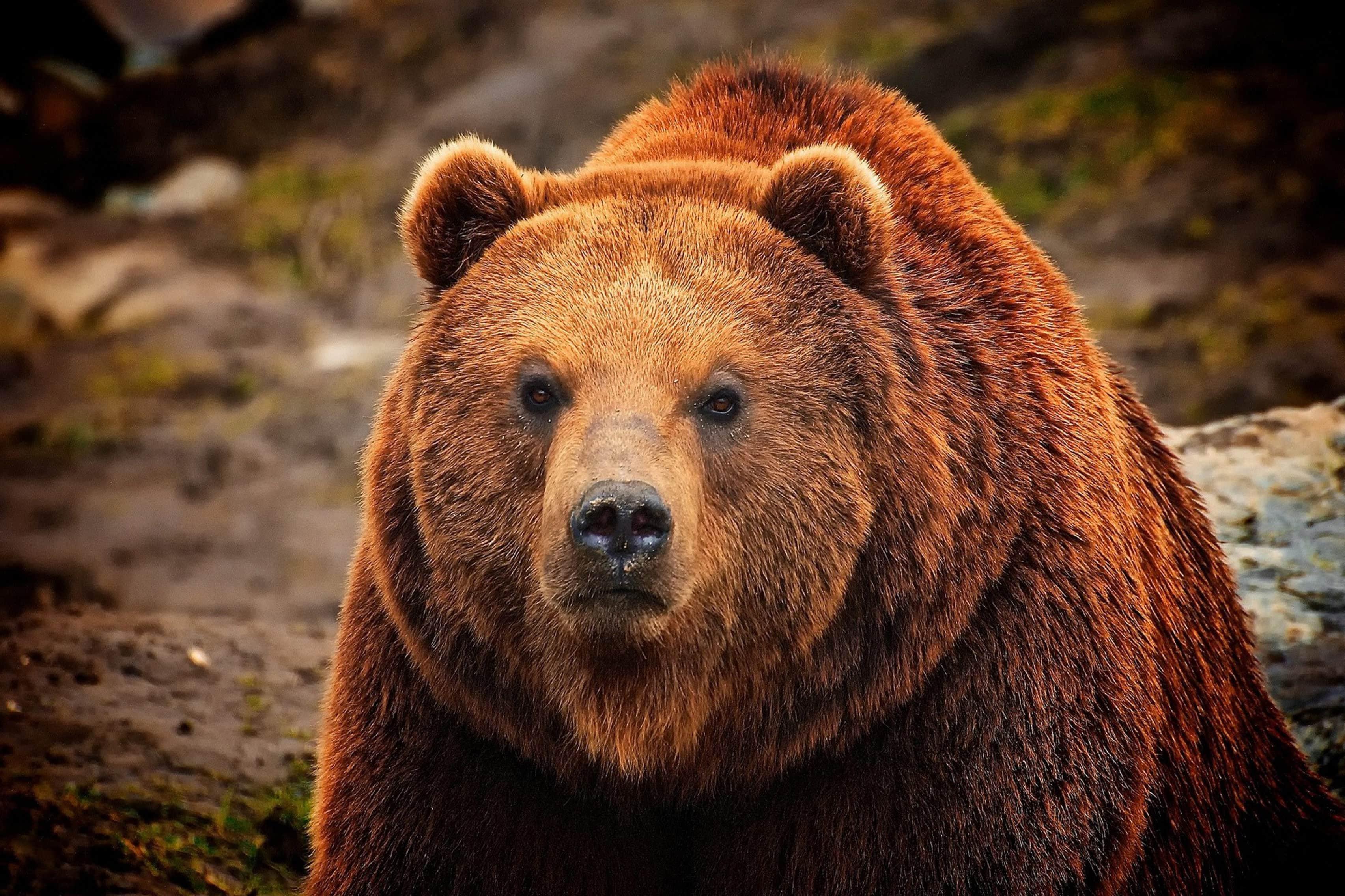 10 самых агрессивных животных на планете